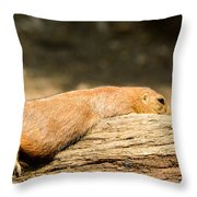 All Stretched Out Throw Pillow