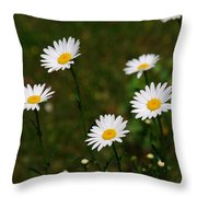 All The Daisies Throw Pillow