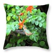 Allen's Hummingbird In Cape Honeysuckle Throw Pillow