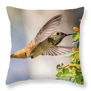 Allen's Hummingbird On Golden Currant Throw Pillow