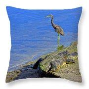 Alligator And Blue Heron Throw Pillow
