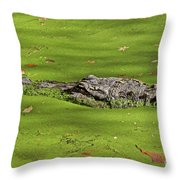 Alligator In Sun Throw Pillow