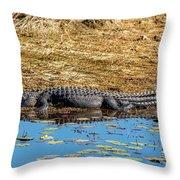 Alligator In The Sun Throw Pillow