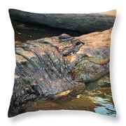 Crocodile Time  Throw Pillow