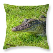 Alligator Up Close  Throw Pillow