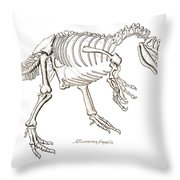 Allosaurus Skeleton Throw Pillow