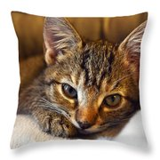 Allura Throw Pillow