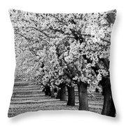 Springtime In The Almond Fields Throw Pillow