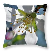 Almonds In Lachish 1 Throw Pillow