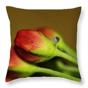 Almost Time Throw Pillow by April Wietrecki Green
