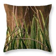 Aloe 3 Throw Pillow