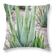Aloe Vera Plant Throw Pillow