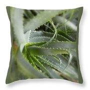 Aloe Vera Throw Pillow