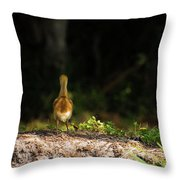 Alone And Searching Throw Pillow