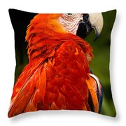 Aloof In Red Throw Pillow