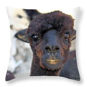 Alpaca 3 Throw Pillow