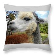 Alpaca Blue Throw Pillow