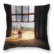 Alpacca Guard Throw Pillow