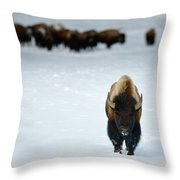 Alpha Male Bison Throw Pillow