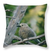 Alpine Camp Robber Throw Pillow