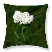 Alpine Yarrow Wildflower 1 Throw Pillow