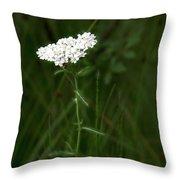 Alpine Yarrow Wildflower 2 Throw Pillow