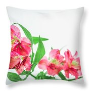 Alstromeria 1 2017 Throw Pillow