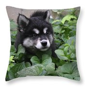 Alusky Pup Peaking Out Of Green Foliage Throw Pillow