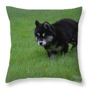 Alusky Puppy Creeping Through Green Grass Throw Pillow