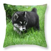 Alusky Puppy Dog Spotting A Toy To Play With Throw Pillow