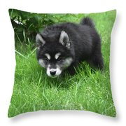 Alusky Puppy Stalking Through Tall Green Grass Throw Pillow
