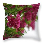 Amaranth Pink Flowering Locust Tree In Spring Rain Throw Pillow