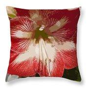 Amaryllidaceae Hippeastrum Stargazeramarylllis Throw Pillow