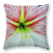Amaryllis Beauty Throw Pillow
