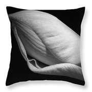 Amaryllis Bw Throw Pillow