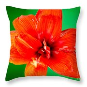 Amaryllis Contrast Orange Amaryllis Flower Appearing To Float Above A Deep Green Background Throw Pillow