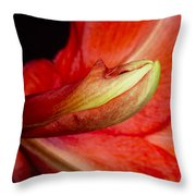 Amaryllis Flower About To Bloom Throw Pillow