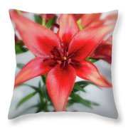 Amaryllis In Fading Throw Pillow