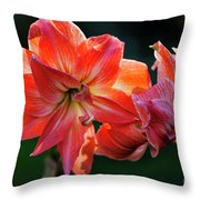 Amaryllis In February 5472 Throw Pillow