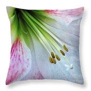 Amaryllis - Lily Throw Pillow