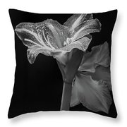 Amaryllis, Monochrome Throw Pillow