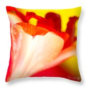 Amaryllis Shadow Abstract Flower With Shadow On Red And Yellow Throw Pillow
