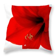 Amaryllis Square Throw Pillow
