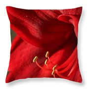 Amaryllis6689 Throw Pillow