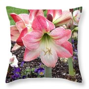 Amazing Amaryllis - Pink And White Apple Blossom Hippeastrum Hybrid Throw Pillow
