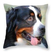 Amazing Bernese Mountain Dog Throw Pillow