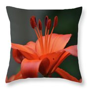 Amazing Blooming Orange Lilies Flowering In A Garden  Throw Pillow