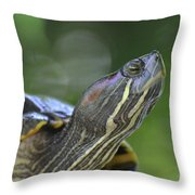 Amazing Close-up Painted Turtle Resting Throw Pillow