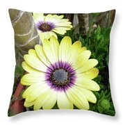 Amazing Daisy  Throw Pillow