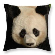 Amazing Face Of A Beautiful Giant Panda Bear Throw Pillow